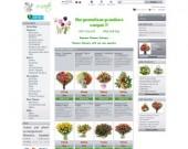 Магазин  за доставка на цветя в Пловдив, София, Варна, Бургас